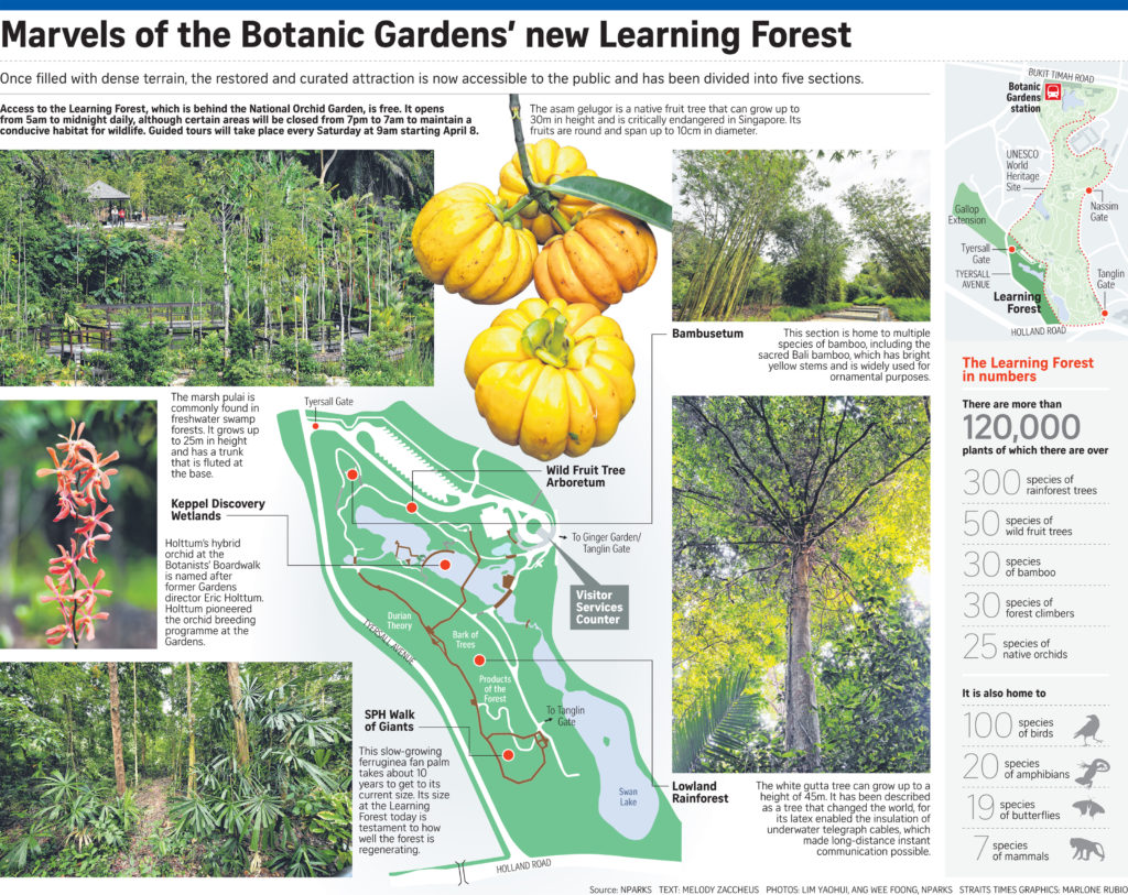 Marvels_of_Botanic_Gardens_new_learning_forest_Goodclassbungalowarea