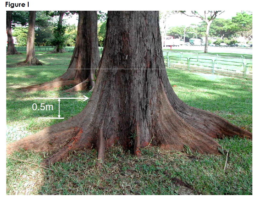 Method of measuring girth of a tree (1)