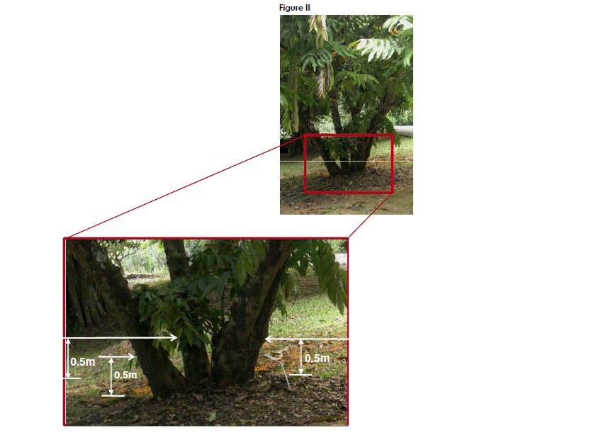Method of measuring girth of a tree (2)