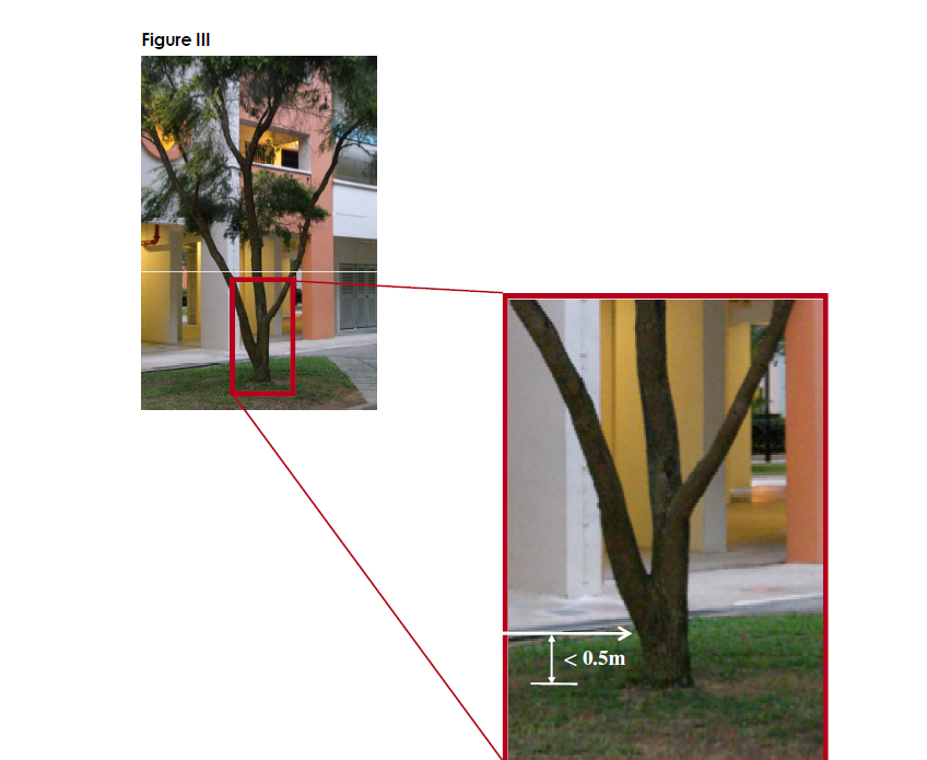 Method of measuring girth of a tree (3)